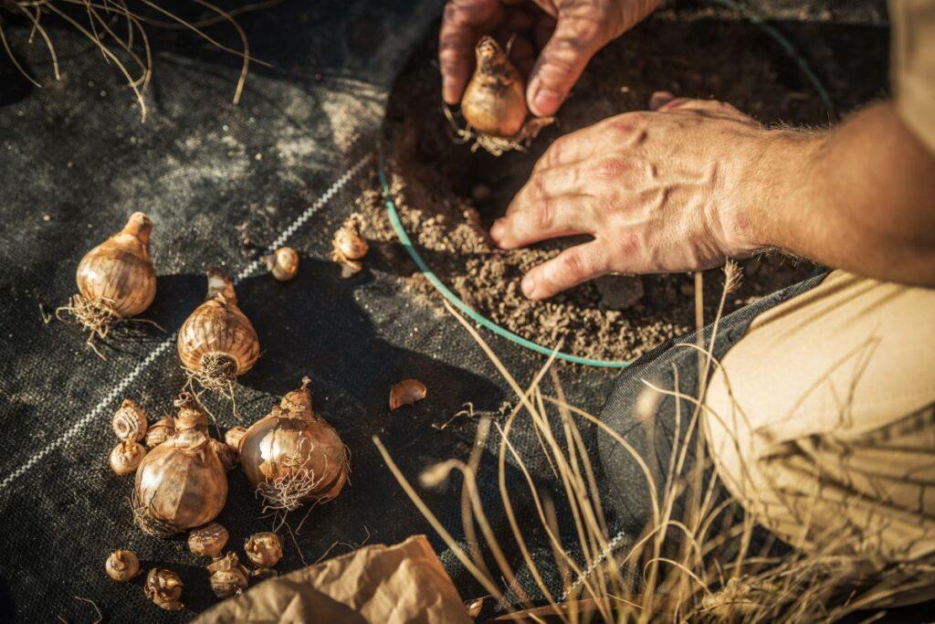 Co należy wiedzieć o sadzeniu cebulek kwiatowych?